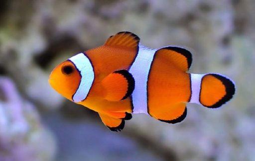 pez de agua salada caracteristicas