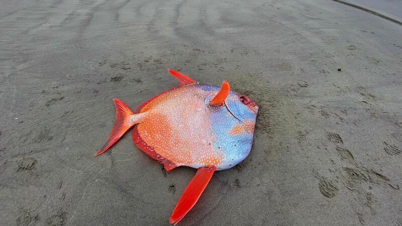 peces muertos
